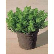 "Plastic butcher's broom MARCUS in decorative pot, green, 4""/10cm"