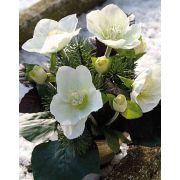 "Artificial Christmas rose arrangement DANITA in clay pot, white-green, 8""/20cm"