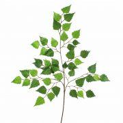 "Artificial Birch foliage spray NIKOLAJ, green, 28""/70cm"