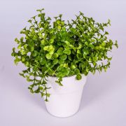 "Fake eucalyptus JOSHUA, in a ceramic pot, green, 8""/20cm, Ø7""/17cm"