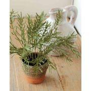 "Plastic asparagus sprengeri GINNY in clay pot, green, 8""/20cm"