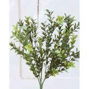 boxwood bush, 35cm