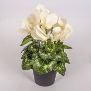 Fake cyclamen HEIDI in a decorative pot, cream, 25cm, Ø5-8cm