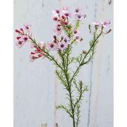"""Artificial wax flower AISHA, light pink, 26""""/65cm"""
